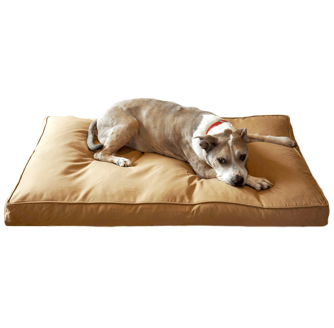 Best Indestructible Amp Chew Proof Dog Beds For 2020